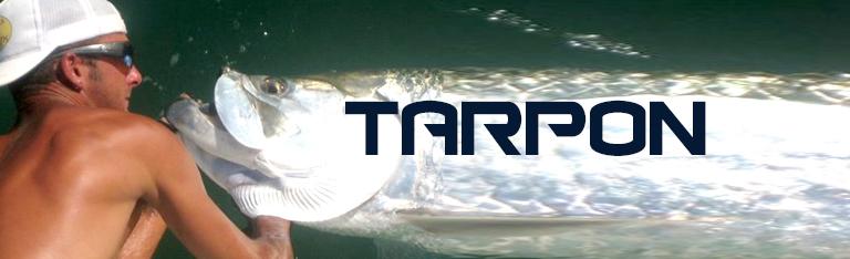 Native Angler Tarpon Fishing