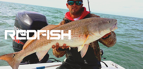 Redfish-Category