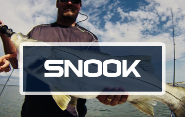 Snook-Category